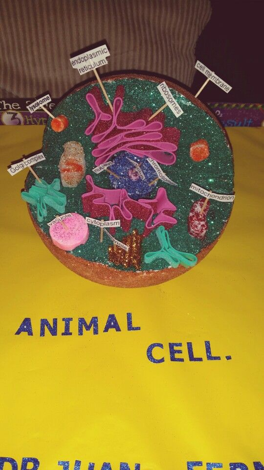 Animal cell proyecto.