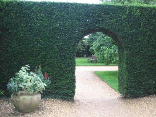 Bildergebnis für arched hedge