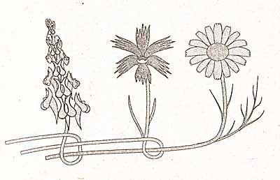 how to make wildflower garland // wreath