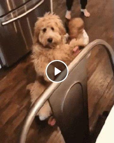 Bebê brincando de Mamãe e filhinha com seu cãozinho!