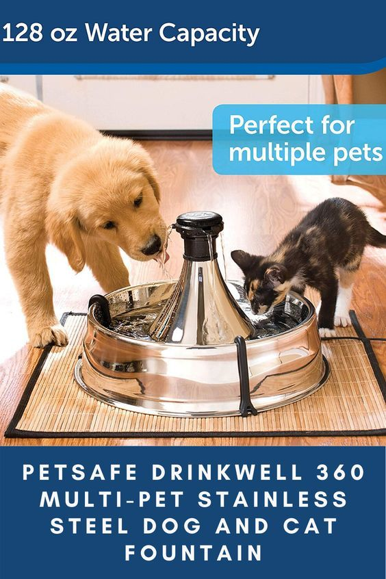 Petsafe Drinkwell 360 Multi Pet Stainless Steel Dog And Cat Fountain Pet Products Pet Supplies In 2020 Multi Pet Cat Fountain Dog Water Fountain