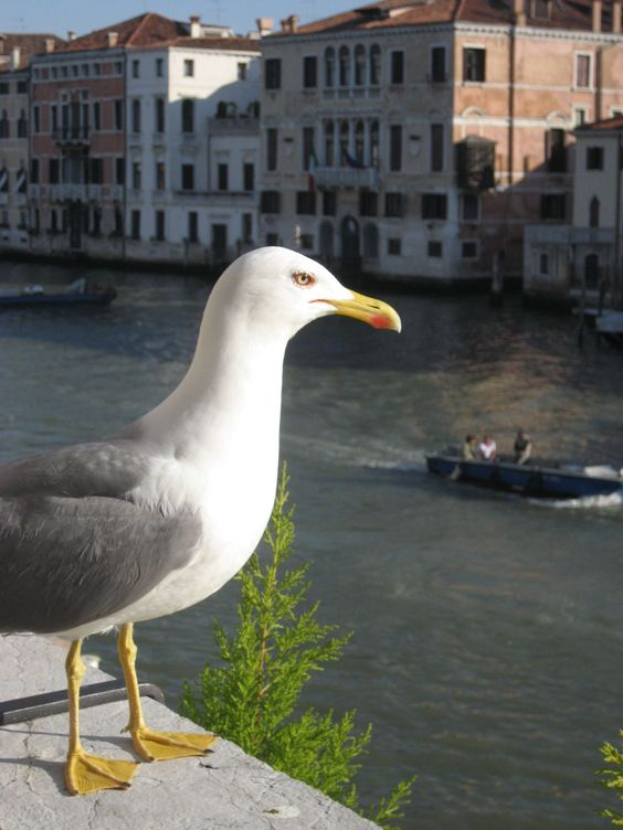 A Watchful Eye on the Grand Canal