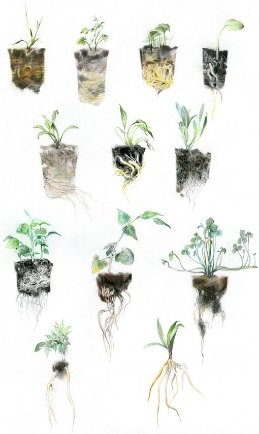 watercolour images with roots and soil included, vulnerable and raw …