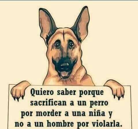 Perros Maltratados No Entiendo Porque Sacrifican Un Perro Por Morder Nina Y No Un Hombre Por Violarla Leona Perros Animales Frases Perros Frases