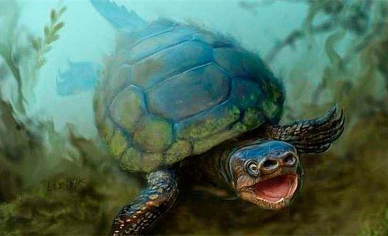 Descubren tortuga con nariz de cerdo