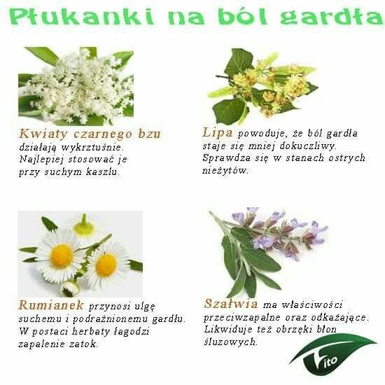 Pin By Sylwia Pieczka On Ciekawostki Plants Fit Women Fitness