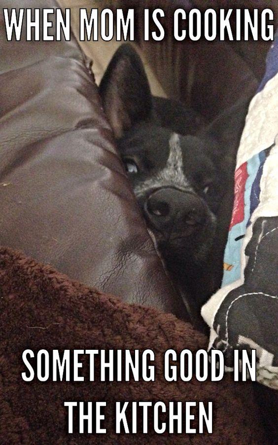 Dog Meme! Kahuna! Hilarious!