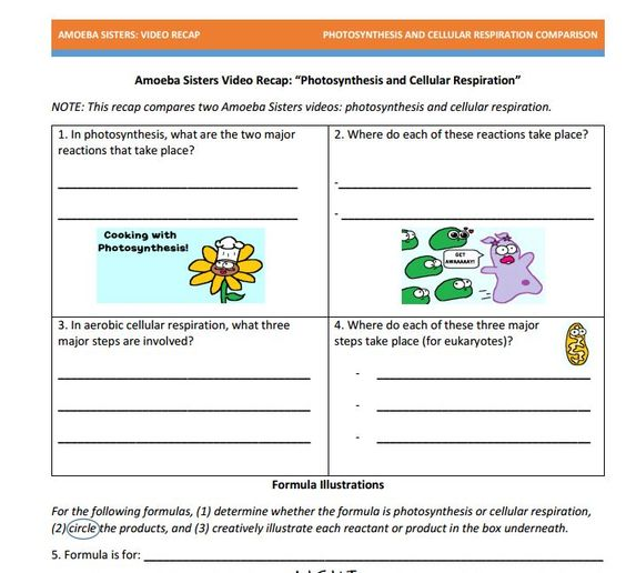 Comparing Photosynthesis And Cellular Respiration Worksheet – Comparing Photosynthesis and Cellular Respiration Worksheet