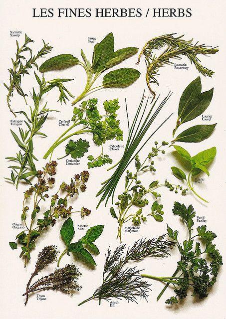 Herbs (Nouvelles Images, France)   Flickr - Photo Sharing!