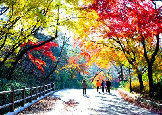 Mùa thu đến với những rặng cây rực màu vàng đỏ ở công viên Namsan