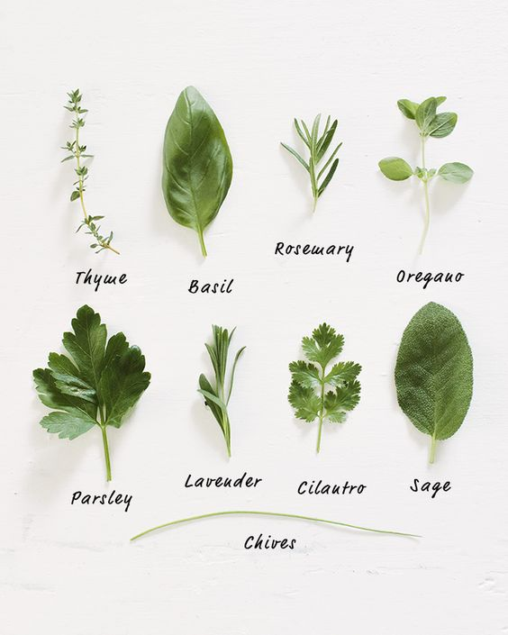 Real Food Tips: Grow Herbs   a Couple Cooks                                                                                                                                                     More