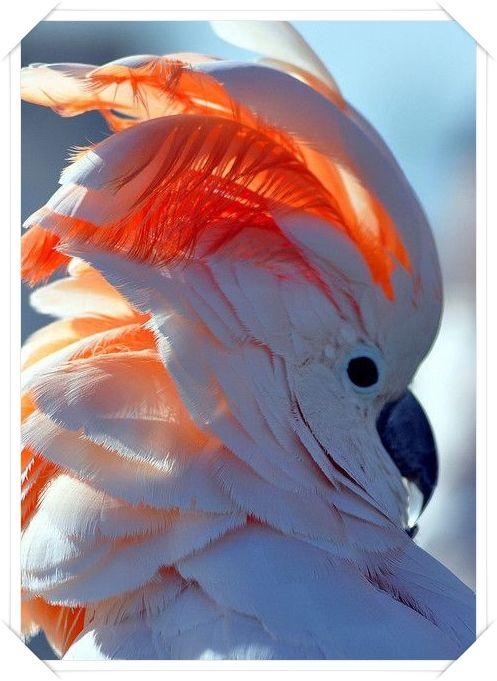 oiseaux divers - Page 2 8164a67bcd4943f376a6a9f9eb8bfc1d