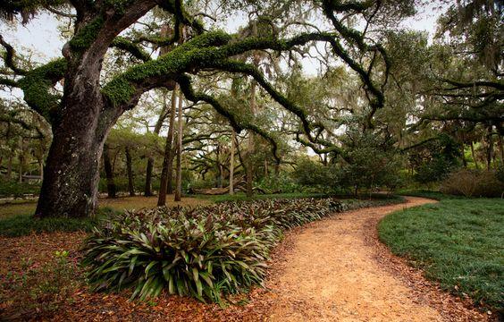 oaks and path, washington oaks state park, palm coast FL