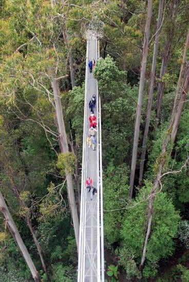 The Otway Fly, a tree top walk  situated 20 kilometres from Colac, Otway Ranges Victoria Australia