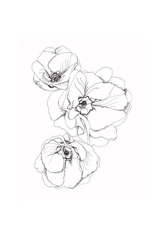 Botanical Poppy Flower Drawing Posted in botanical gardens,