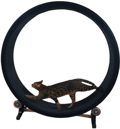 ハムスターみたいに遊べる猫の回し車|猫グッズのネコモノ帳