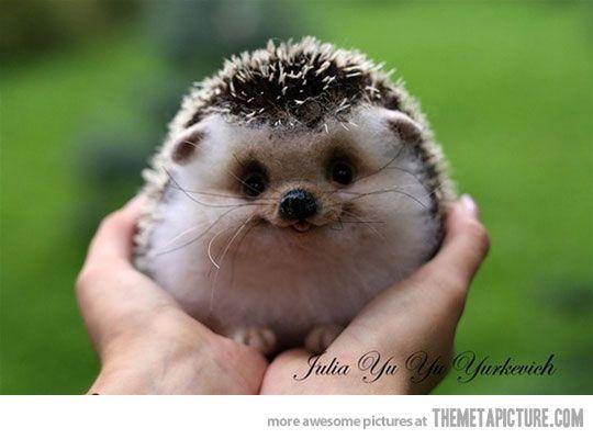 Happy Hedgehog…