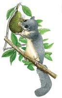 Rongeurs sans gêne: souris, loirs, lérots