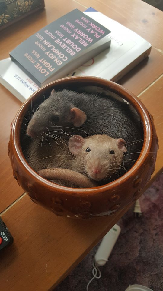 ratties hanging out