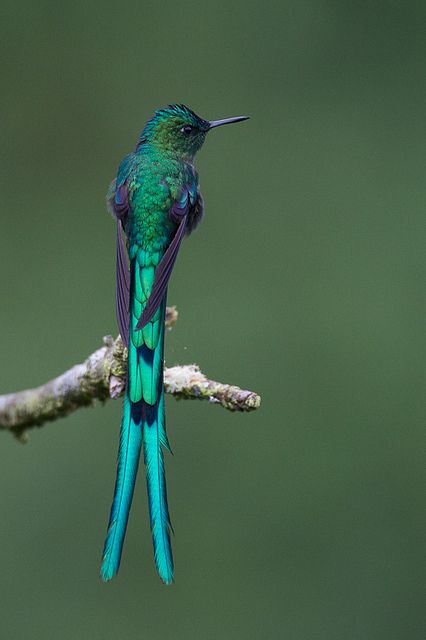 Colombia, Hummingbirds and Bobs on Pinterest