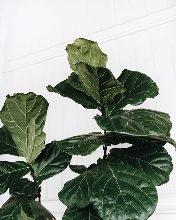 I haven't been in the dating game in a while but I assume it's the same as trying to work out what your fiddle leaf fig needs to keep it…