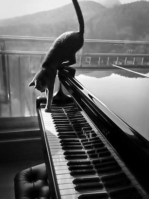 ピアノとネコのモノクロ・白黒写真の壁紙