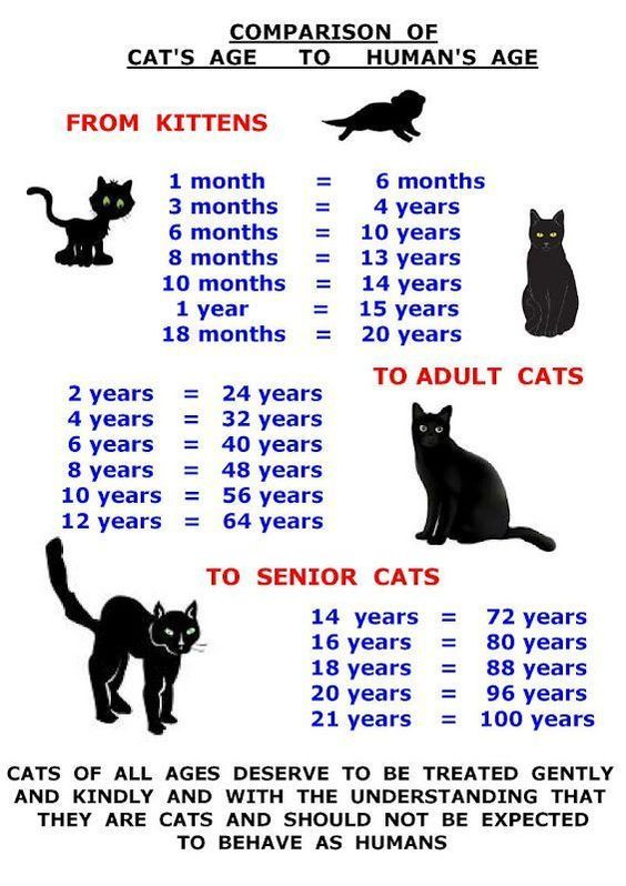 Comparison Of Cat S Age To Humane S Age Cat Ages Cats Kittens
