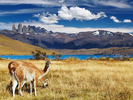 parc national Torres del Paine | Le parc national Torres del Paine : Les plus belles merveilles de ...