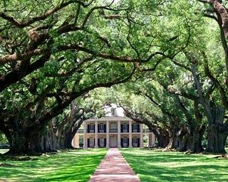 plantation: Southern Plantations, Alley Plantation, Plantation House, Dream Homes, Dream House, Plantation Homes, Beautiful Place, Oak Alley, Oak Tree