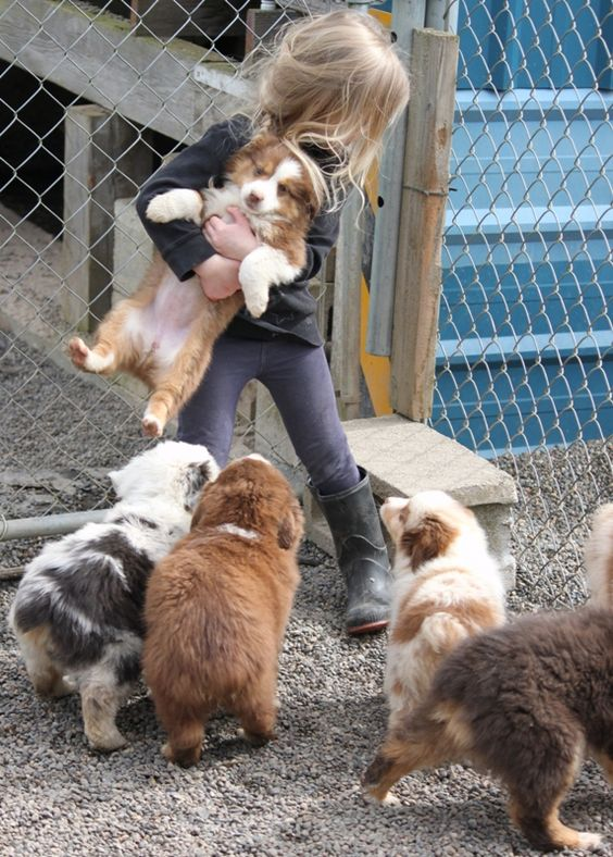 If I had known about Australian Shepards when I was young. This would have definitely been me!