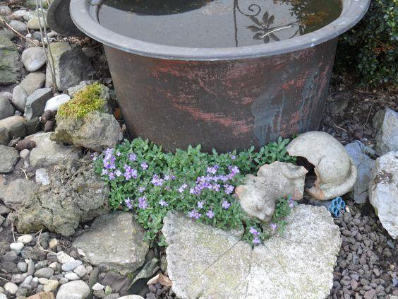 Ein alter Messing-Waschkessel, bepflanzt mit einer Seerose...