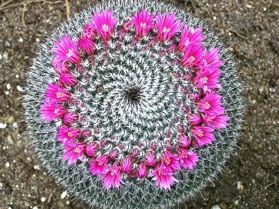Nei vivai potrete trovare davvero molti tipi di cactus e piante grasse di diverse dimensioni e con fiori dai mille colori. In questo modo potrete creare in poche mosse il vostro piccolo giardino di ca