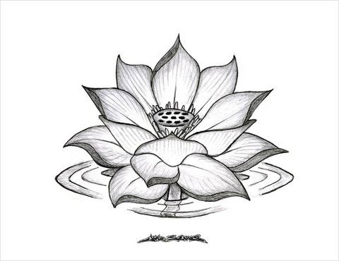 19 Flower Drawings Free Psd Ai Eps Format Download In 2021 Lotus Flower Drawing Flower Sketches Flower Drawing Images