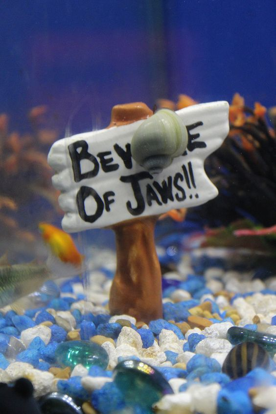 image of an aquarium sign with a snail and a fish