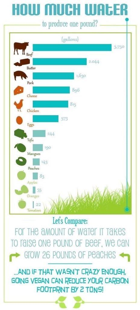reduce your carbon footprint ~ it makes sense to go #vegan #eco
