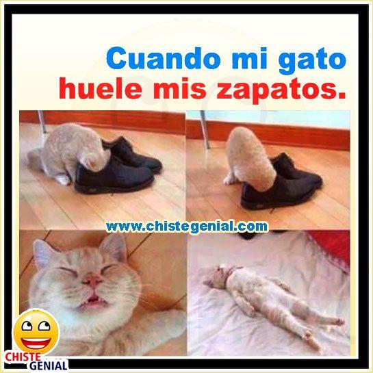 Cuando Mi Gato Huele Mis Zapatos Los Mejores Chistes Buenos Cortos Imagenes Bromas Graciosas Y Memes De La Web Para Cute Memes Funny Memes Animal Memes