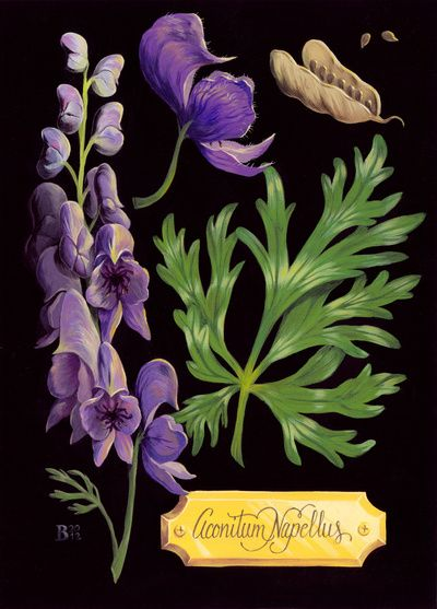 Wolfsbane, print from Society 6. Part of the Poisonous Plants series by Britt Wilson: