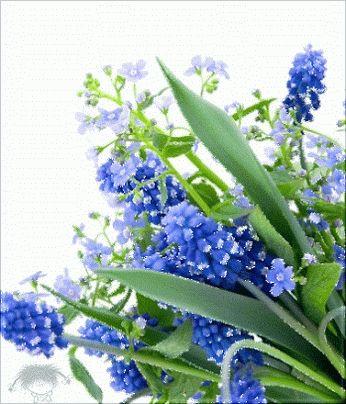 FLOWER LOVE~~