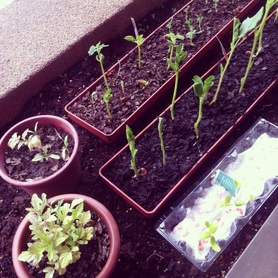 growing #urbangarden
