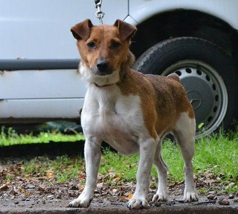 Lucky - Allsorts Dog Rescue