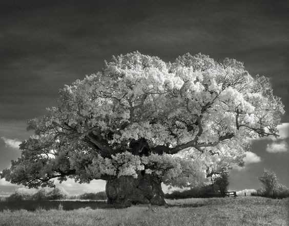 Beth Moon, a photographer based in San Francisco, has been searching for the world's oldest trees for the past 14 years.