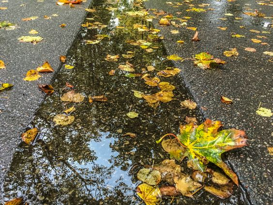 Мокрые краски осени в городе Калининград. Фото Жени Шведы