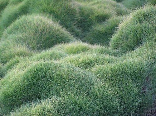 Grass garden designs: