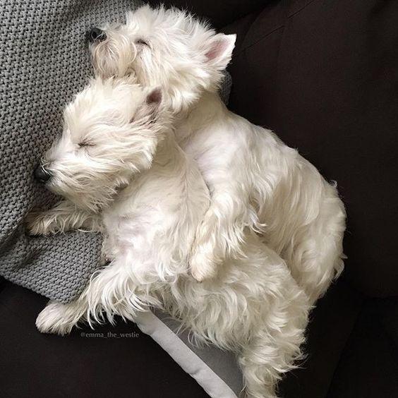 Lazy Sunday!: