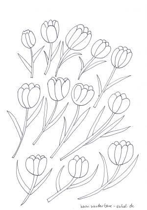 schablonen-2/Ausmalbild-Tulpenbluete