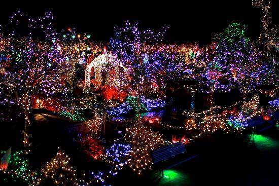 81c22af9401244f8ab8f1267692d2ad3 - Van Dusen Botanical Gardens Christmas Lights