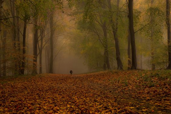 Foggy Bottom ... by pogmomadra via Fluidr