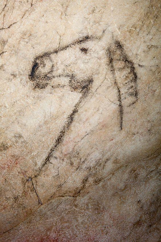 Cueva de Tito Bustillo. Asturias - la grande tête de cheval qui domine le pan...