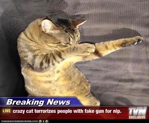 cat adjuster training