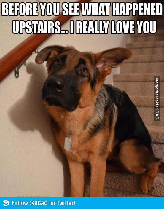 Before you see.....sooo my dog